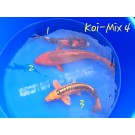 Koi Mix 4 Nr.1 Showa